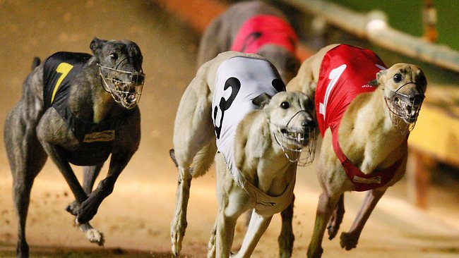 ​How to Watch Live Greyhound Racing at bet365