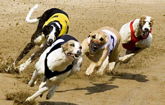 How to Watch Racing Post Greyhound TV at bet365